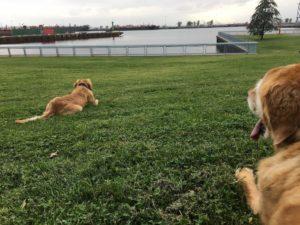 Louie & Ollie